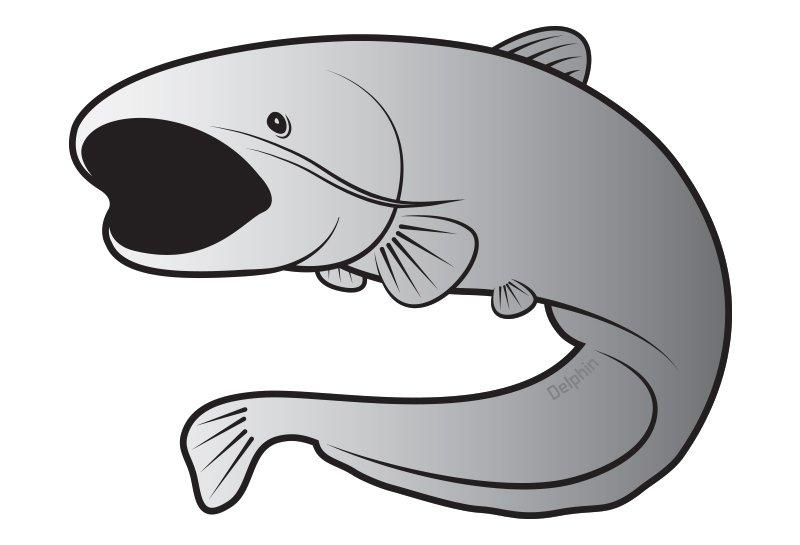 Delphin n�lepka sumec SILVER
